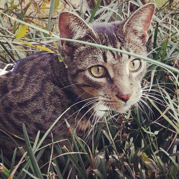 kittykatboy